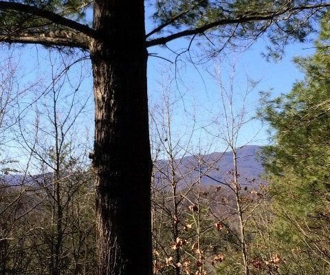 96-2 Wild Orchid Trail, Bryson City, NC 28713