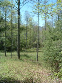 Lot 3(8)1 Trails End Bryson City, NC 28713