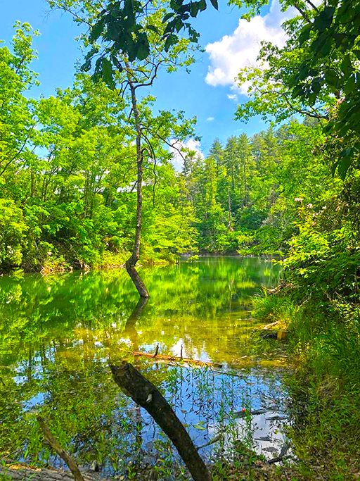 70 Acres with 1000'+ of Lakefront shoreline *very private oasis* off Lower Tuskeegee Rd, Graham Co. Almond, NC 28789